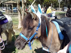 11am 3pm Pony Rides Large Barnyard Petting Zoo Virginia Beach Farmers Market For A Fee